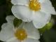 한택식물원의 봄소식